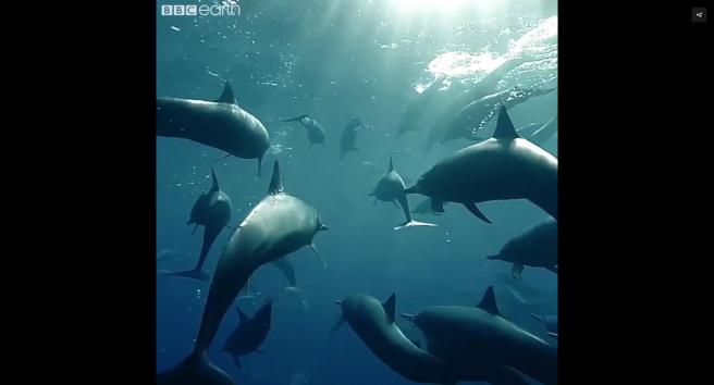 Dolphins_by_Du_Preez